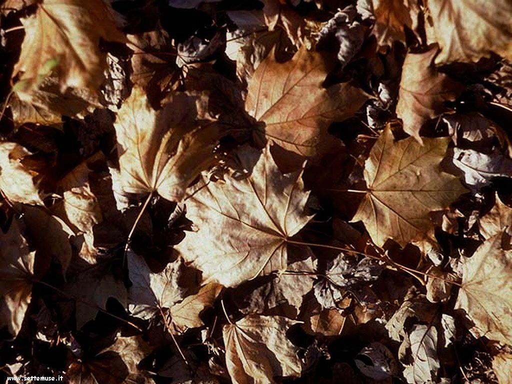 foto di foglie 120