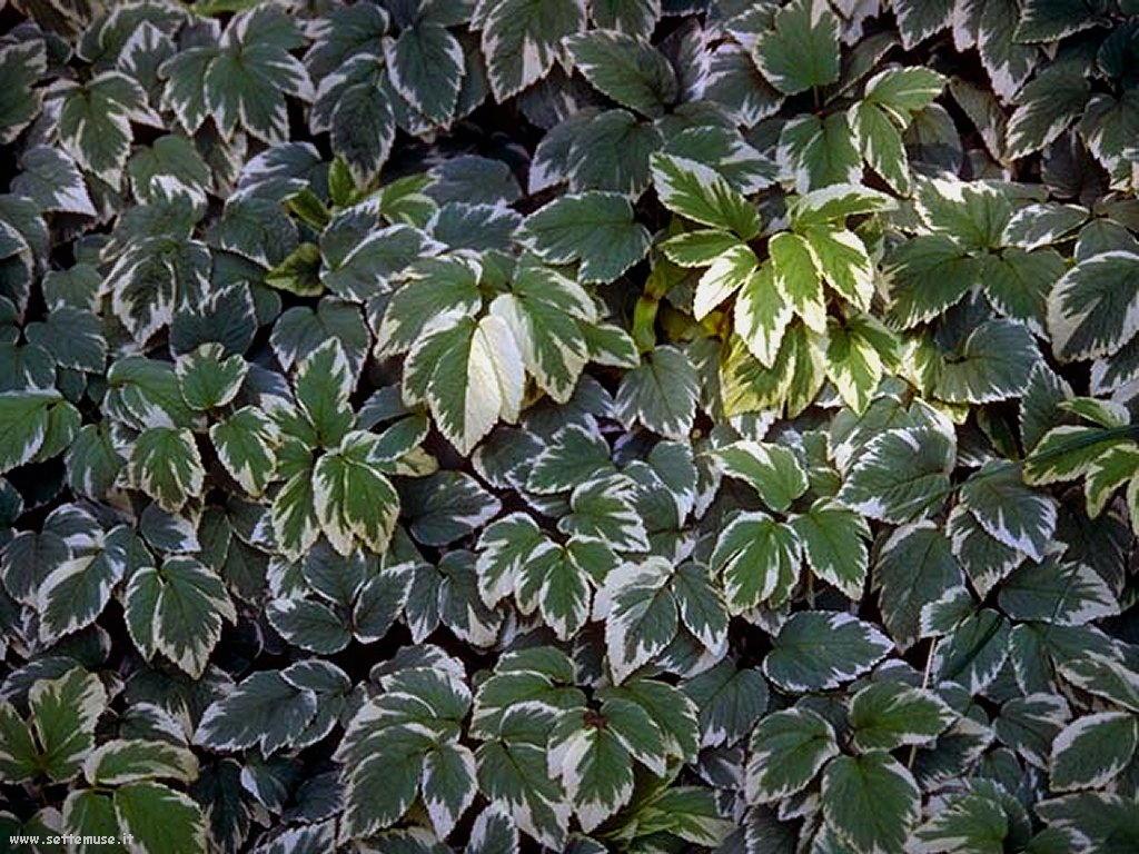 foto di foglie 121