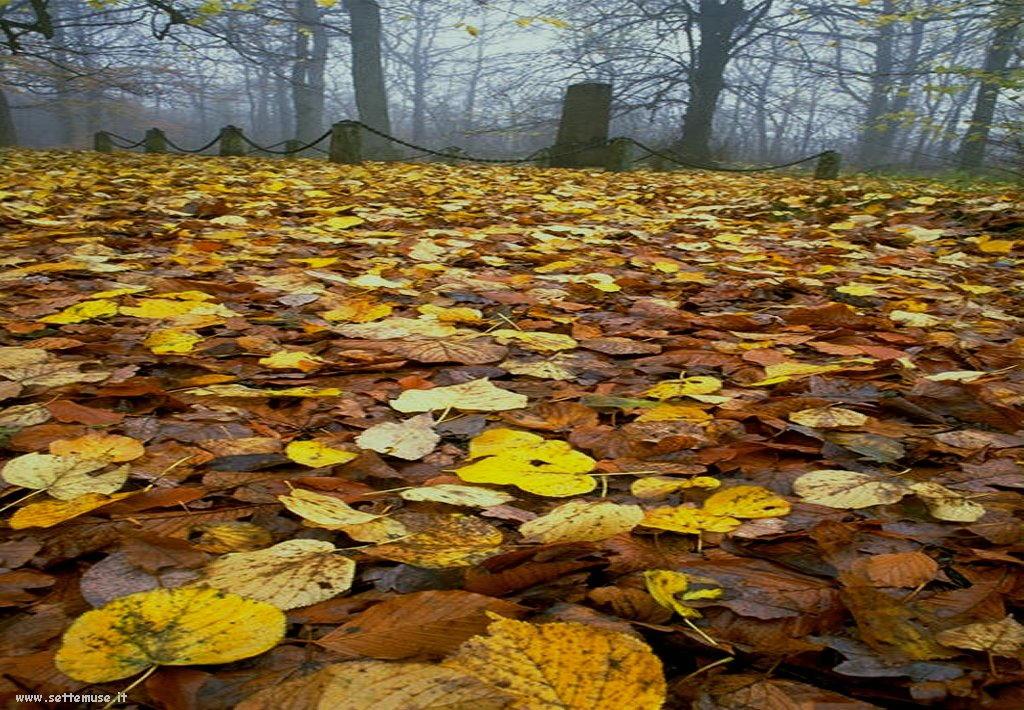 foto di foglie 122