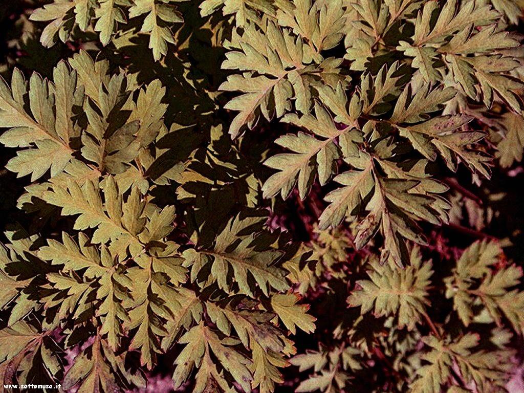 foto di foglie 123