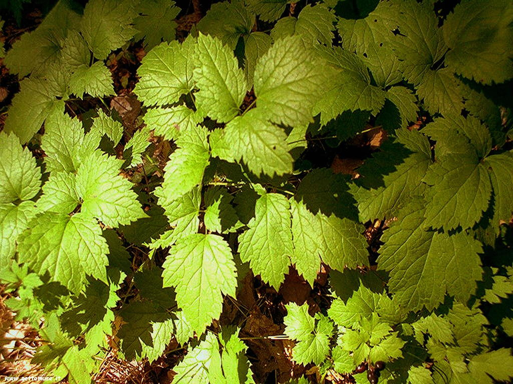 foto di foglie 124