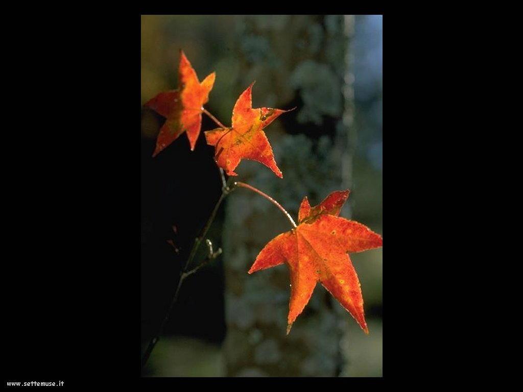 foto di foglie 127