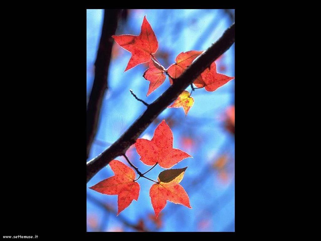 foto di foglie 128