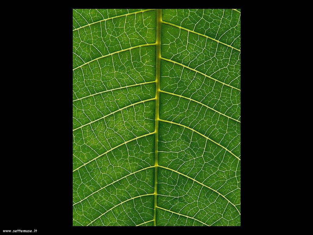 foto di foglie 129