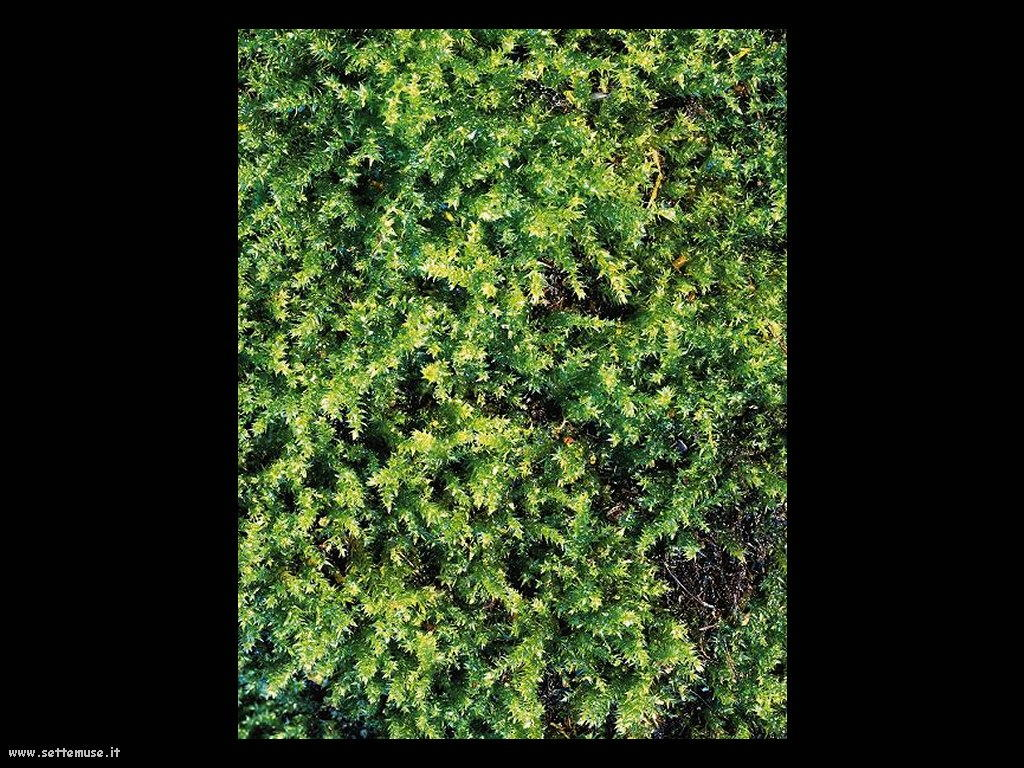 foto di foglie 131