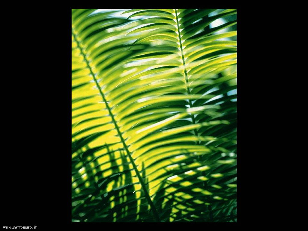 foto di foglie 135
