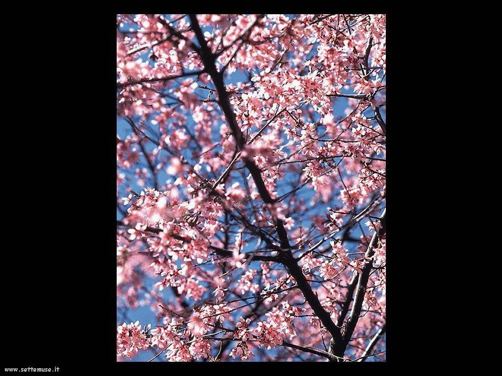 foto di foglie 136