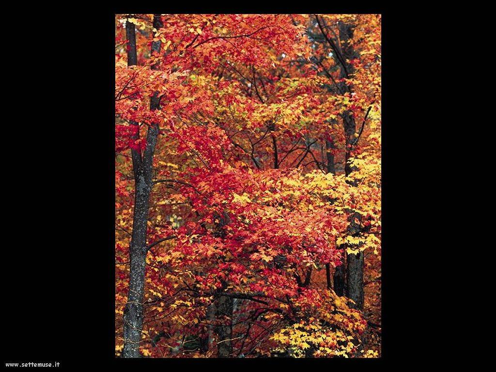 foto di foglie 137