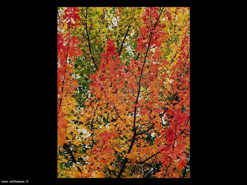 foto di foglie 138