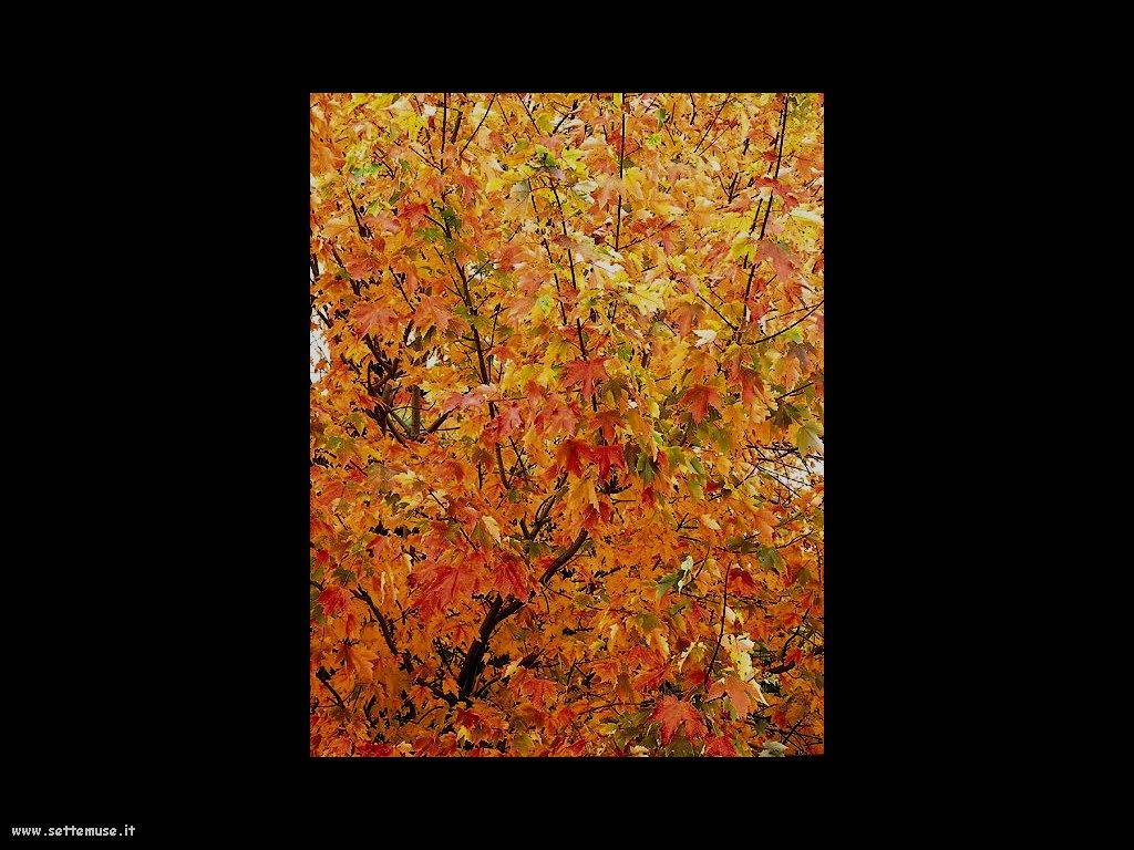foto di foglie 139