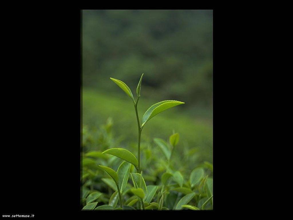 foto di foglie 140