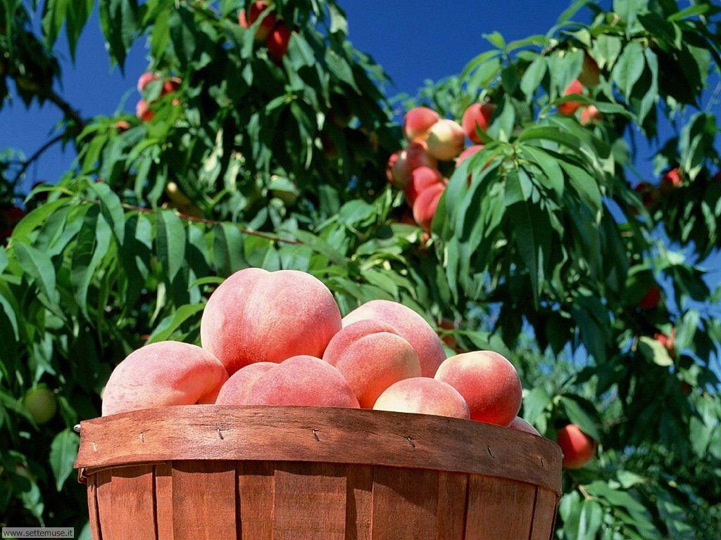 Sfondi desktop frutta e verdura_048