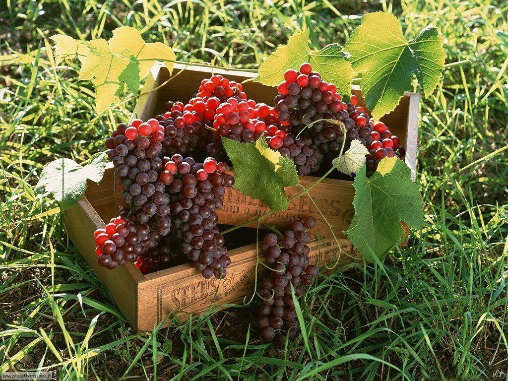 Sfondi desktop frutta e verdura_049