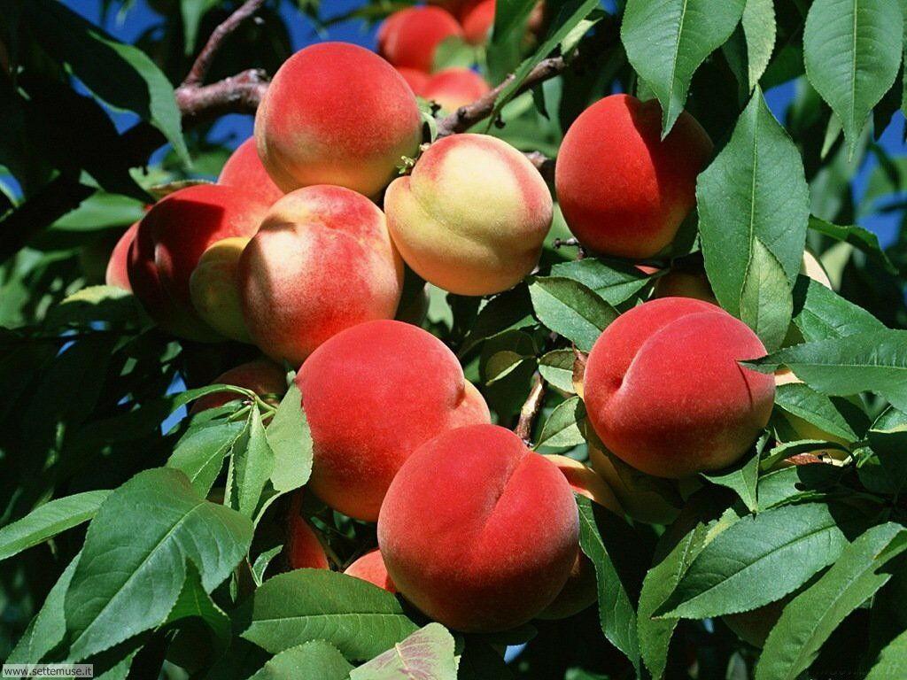 Sfondi desktop frutta e verdura_054