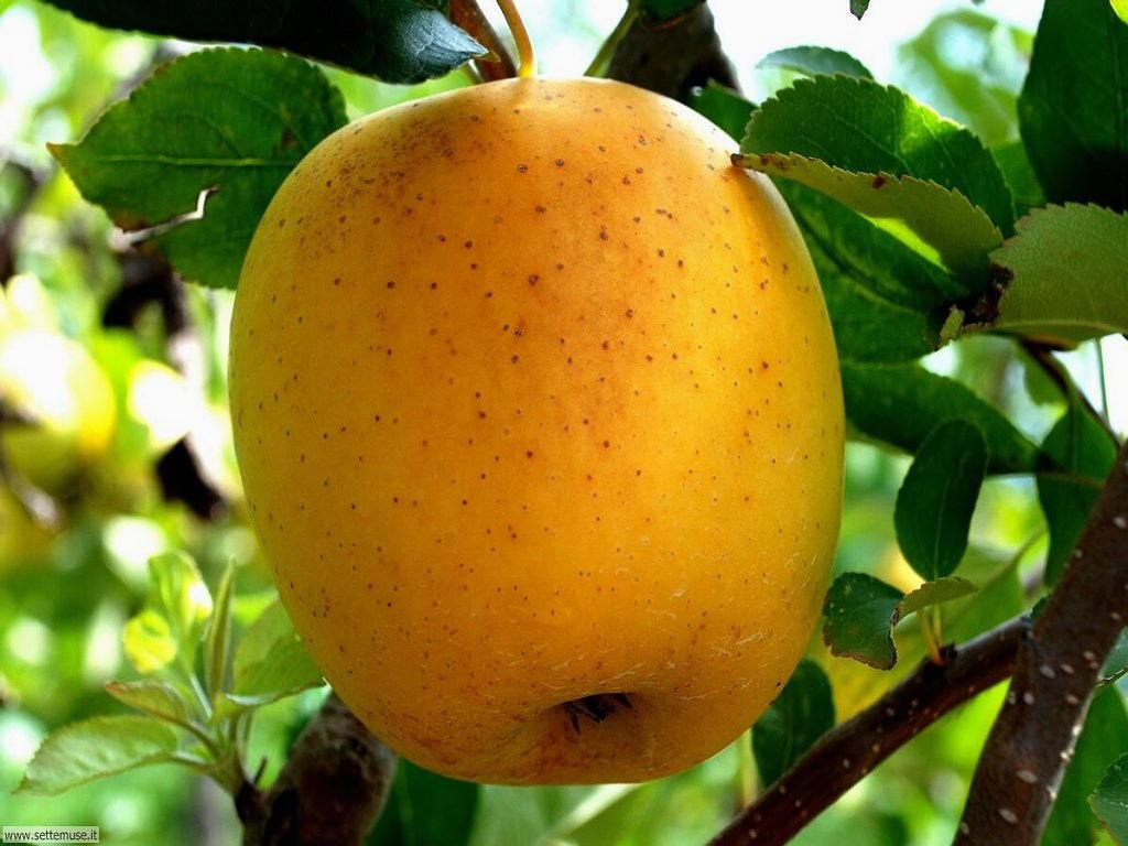 Sfondi desktop frutta e verdura_063