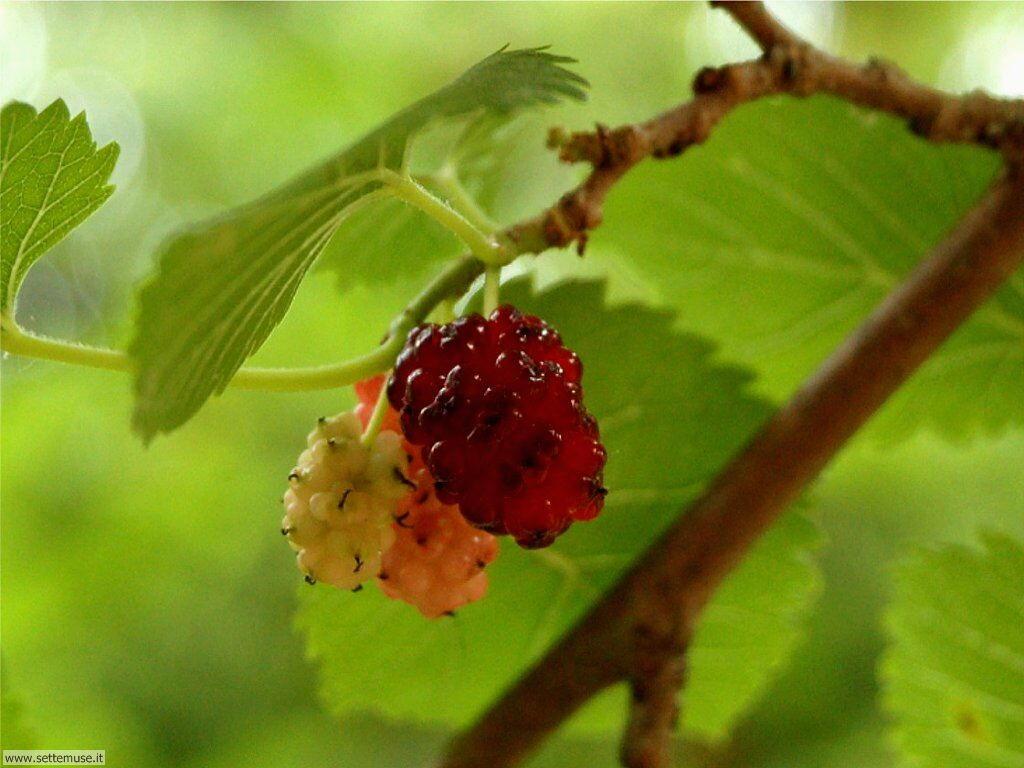 Sfondi desktop frutta e verdura_067