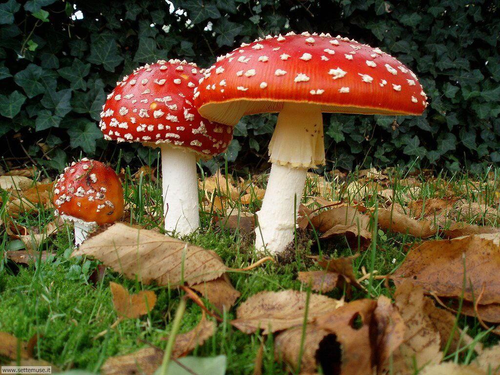 foto di funghi vari per sfondi