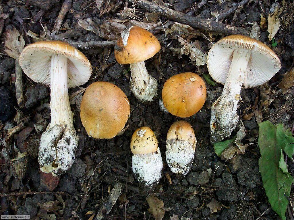vari funghi 4