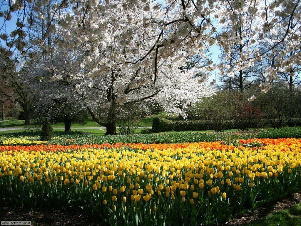 Foto giardini per sfondi - Fiori di giardino foto ...