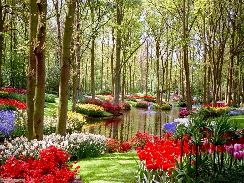 Slideshow foto giardini for Immagine idee per giardini