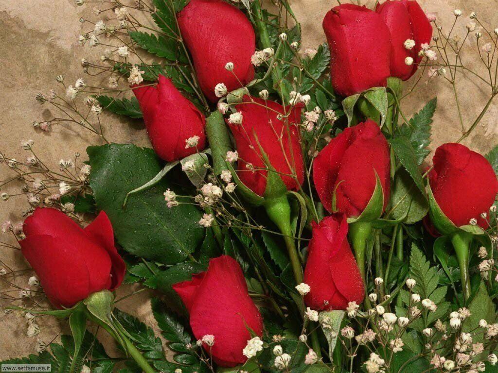 foto amore e innamorati per sfondi 019.jpg mazzo di rose