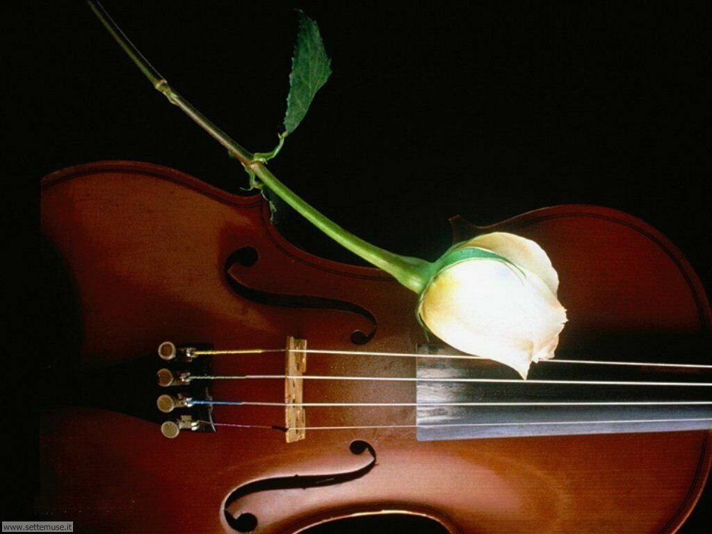 foto amore e innamorati per sfondi 020.jpg rosa e violino