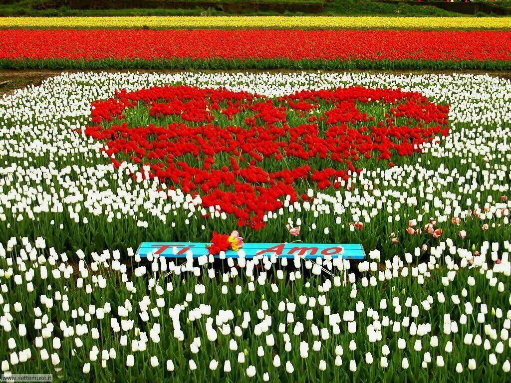 foto amore e innamorati per sfondi 025.jpg cuore coi fiori