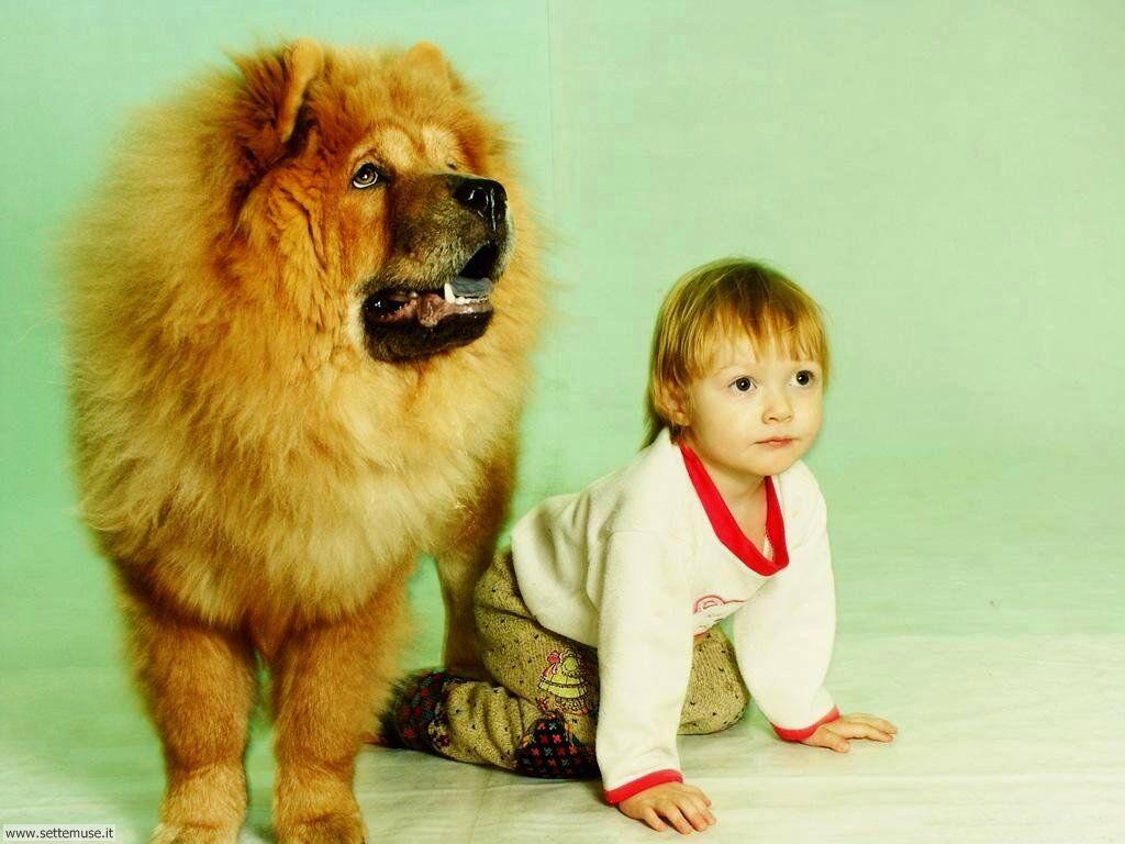 foto bambini e neonati per sfondi 045.jpg bambino con cane