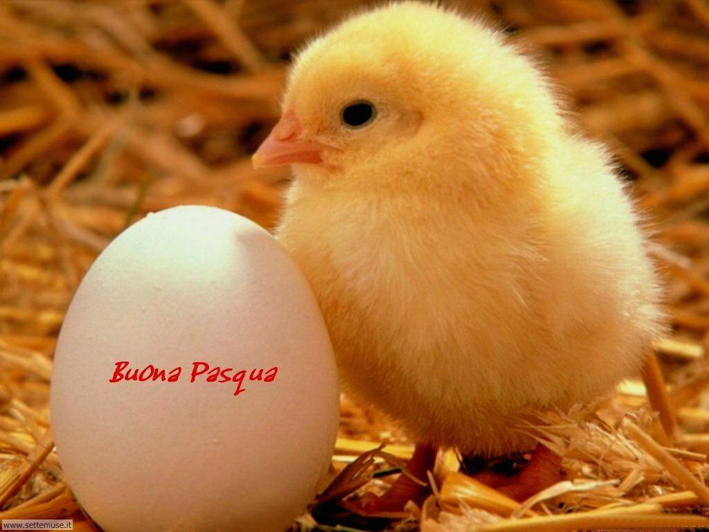 foto di pasqua uova colomba pasquale per sfondi 3