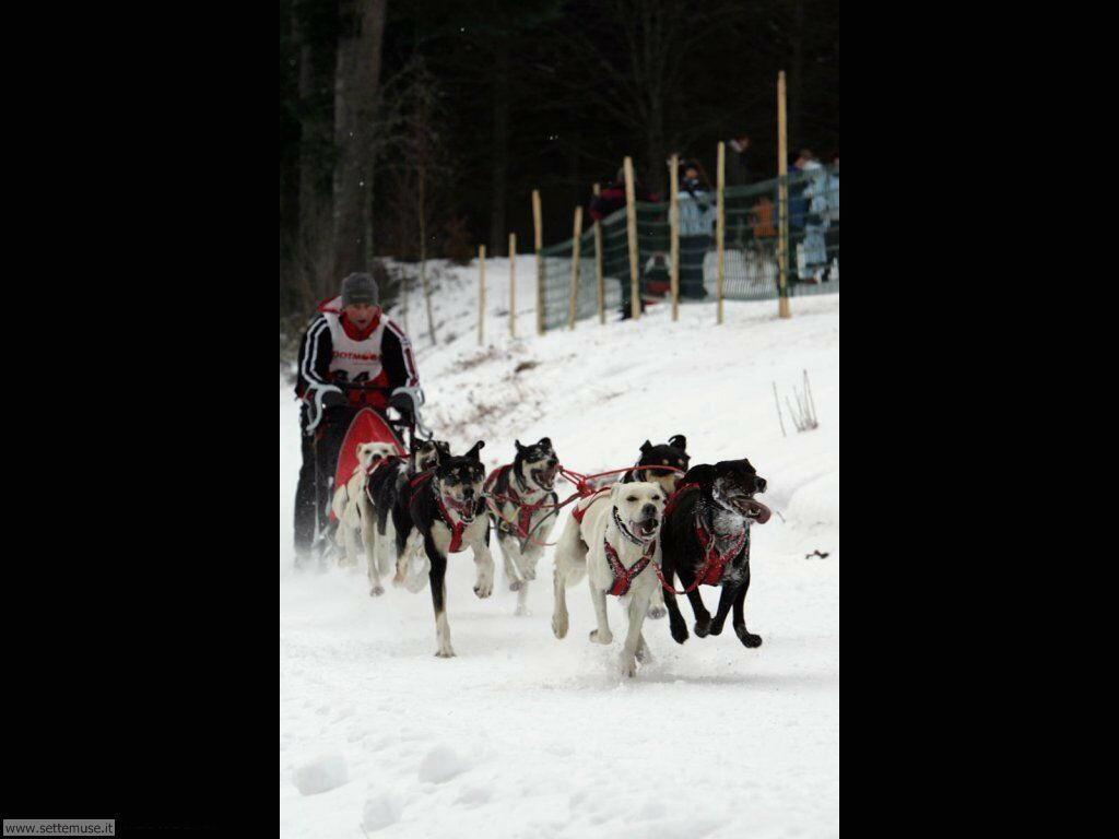 foto sport invernali 13
