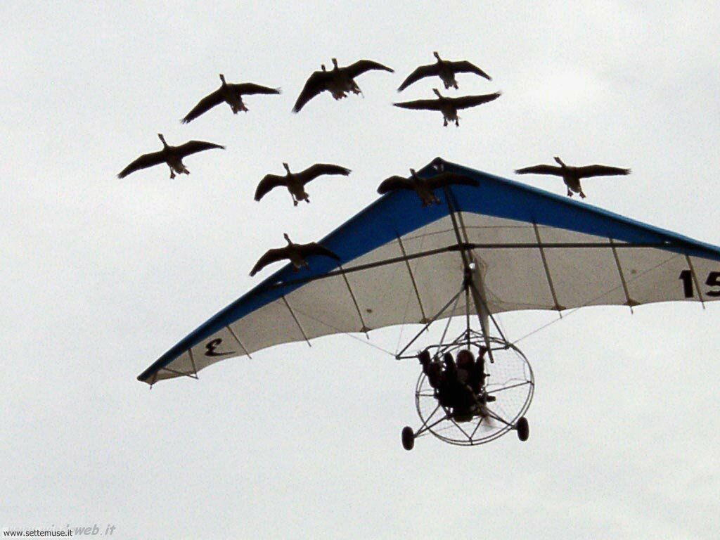 foto di volo sportivo volo aereo deltaplano per sfondi 49