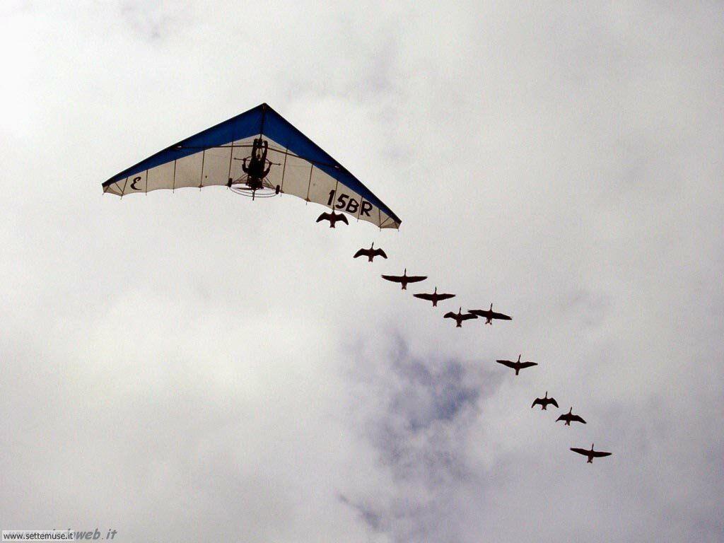 foto di volo sportivo volo aereo deltaplano per sfondi 50