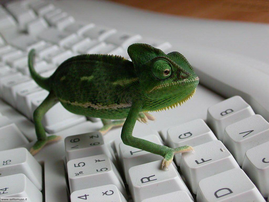 foto per sfondi desktop PC 009