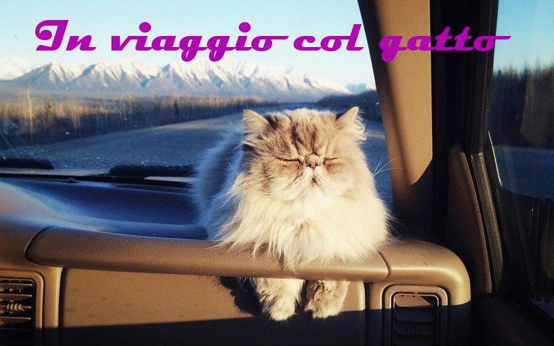 foto viaggi col gatto