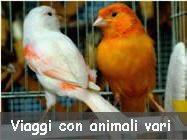 Viaggi con animali