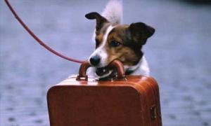 viaggiare col cane