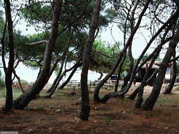 Il Bar del Parco  Kamenjak