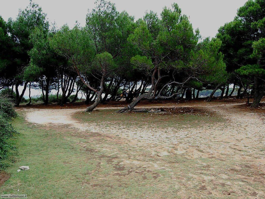 foto croazia premantura 040