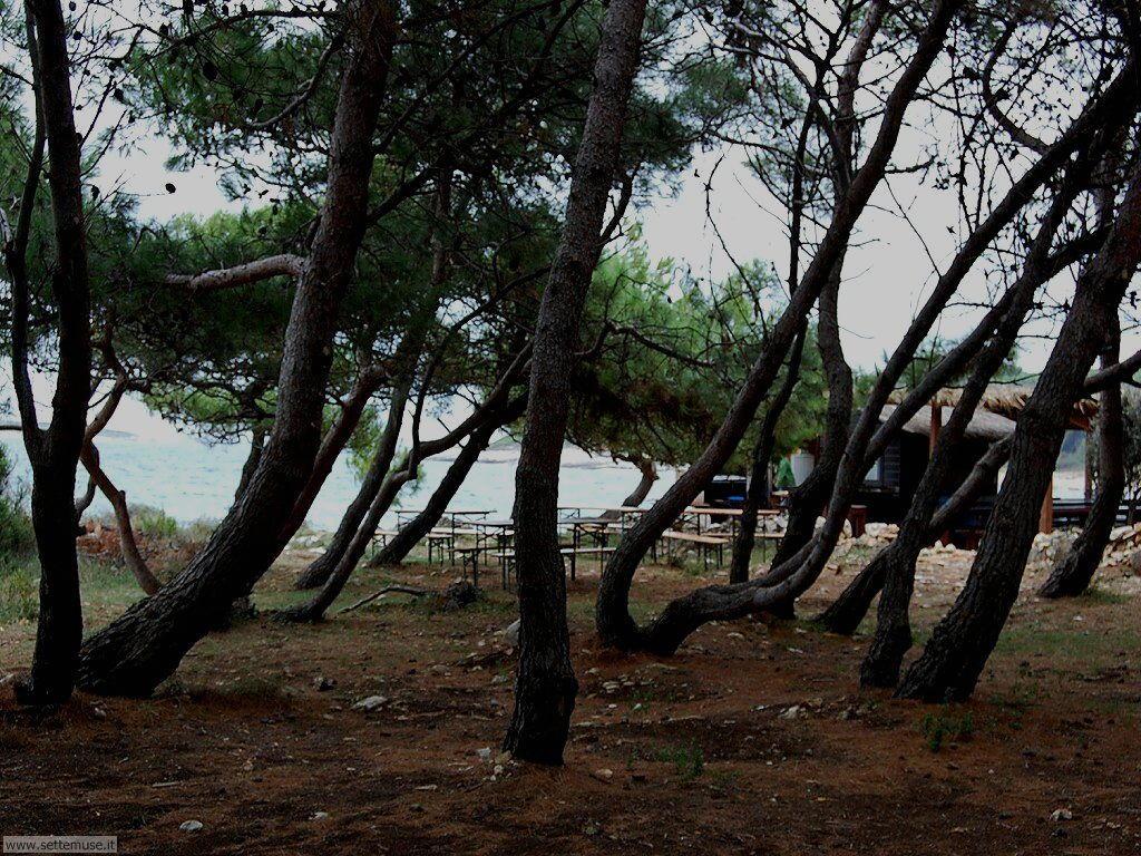 foto croazia premantura 041