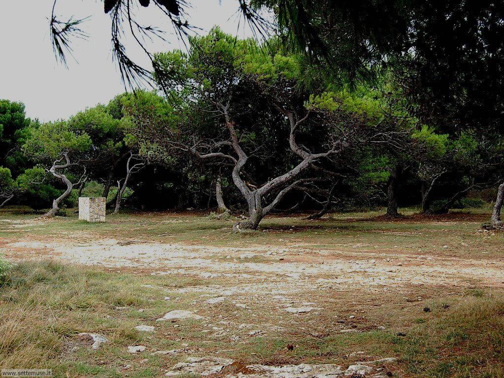 foto croazia premantura 049