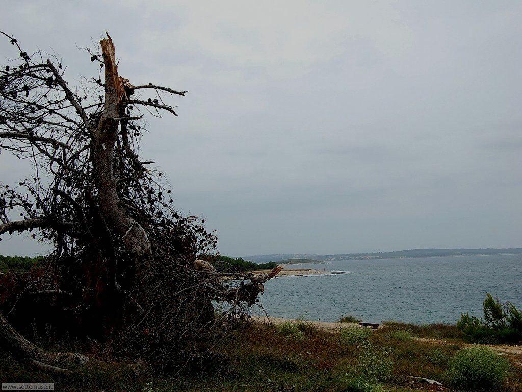 foto croazia premantura 050