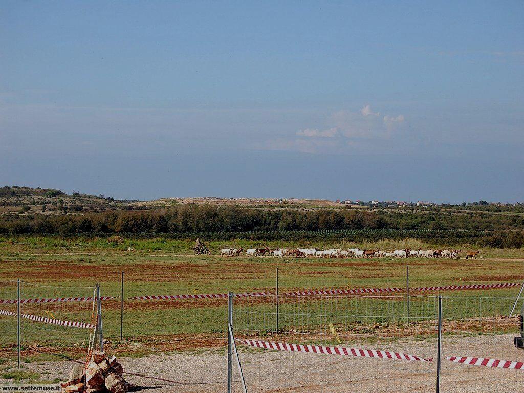 foto croazia vista aerea 5 la pista con passaggio di pecore