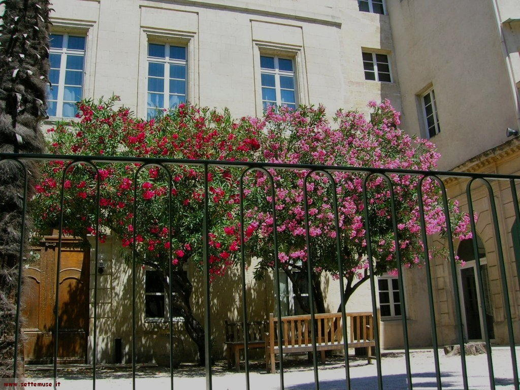 foto Arles 145