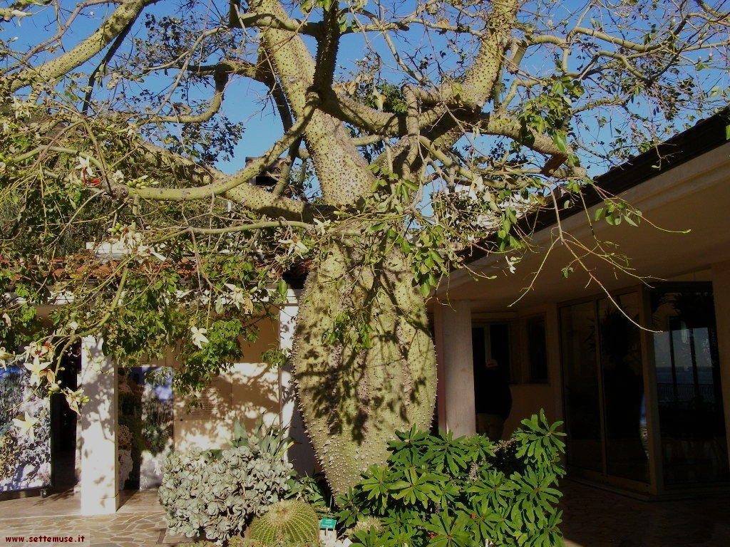 slideshow foto monaco giardini esotici