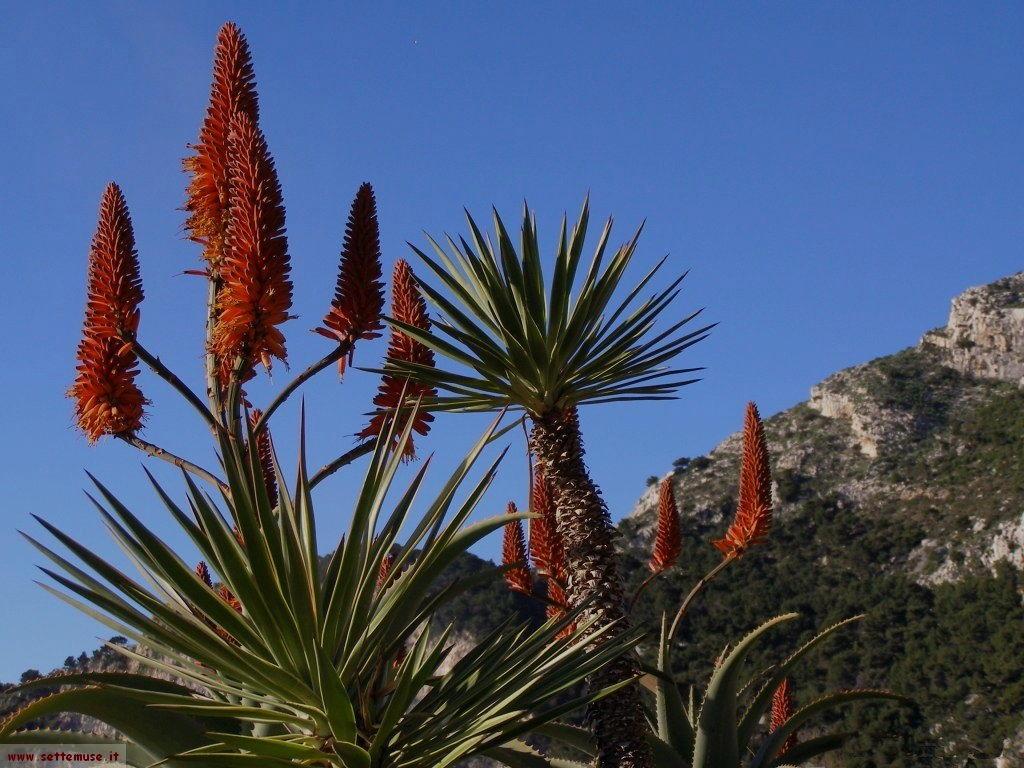 foto Francia Monaco giardini esotici