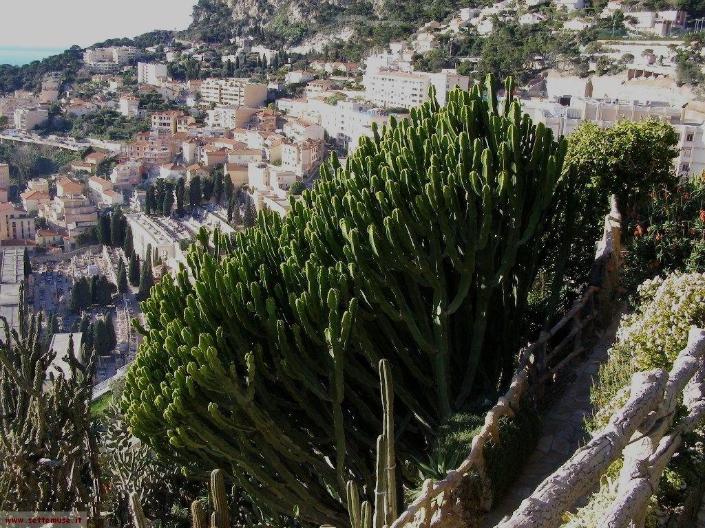 foto Monaco giardini esotici