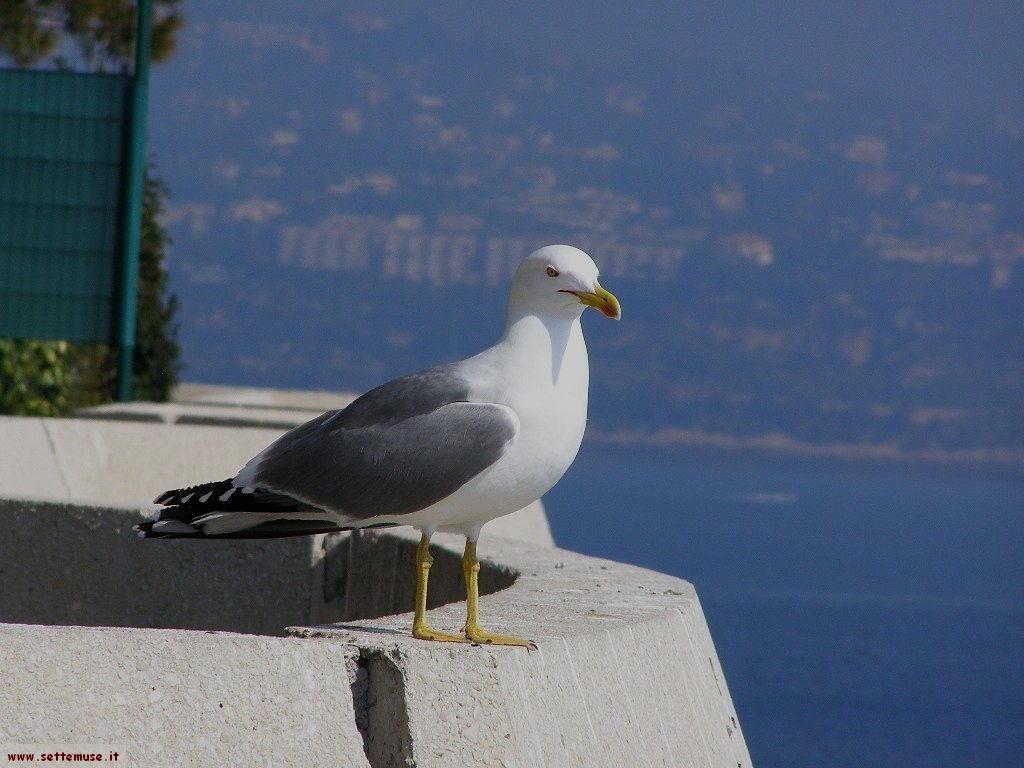 Gabbiano sul terrazzo a Monaco