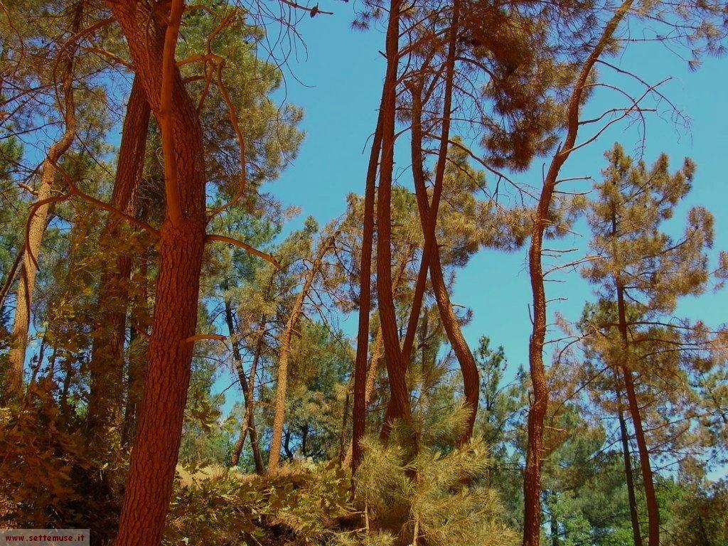 foto Francia Roussillon 2