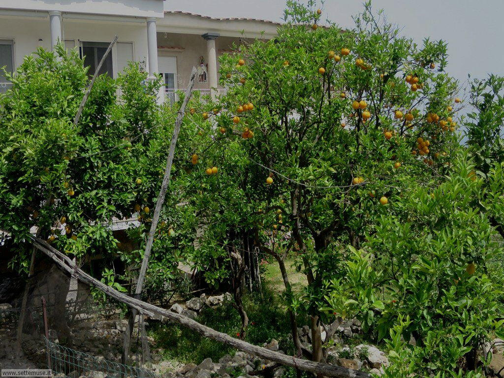 Isola di Capri 008