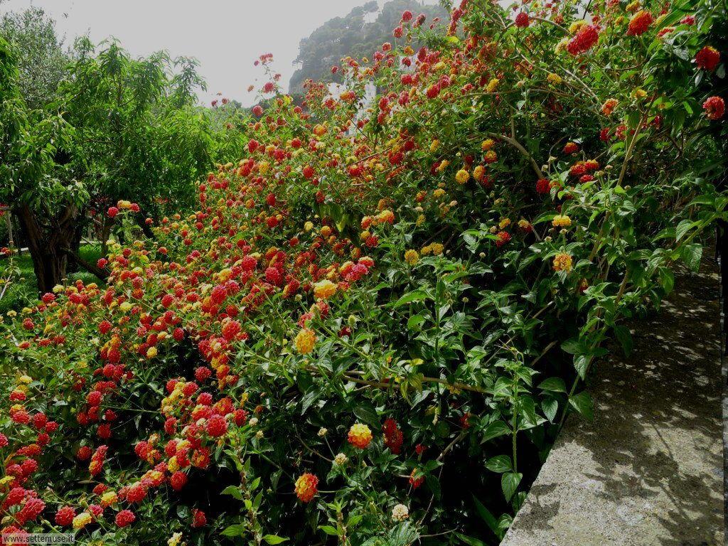 Isola di Capri 024